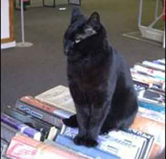 kucing_rajin_ke_perpustakaan